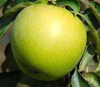 Яблоки Гренни Смит  (65+)