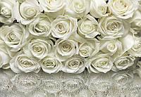 Фотообои 8-314 KOMAR A la rose 368х254