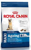 Корм Royal Canin (Роял Канин) MAXI AGEING 8+ для собак крупных пород старше 8 лет, 3 кг