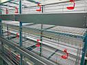 Клетка КР-1/108 для несушек и бройлеров на поддоне - 108 голов (разборная), фото 3