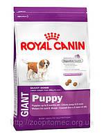 Корм для щенков Royal Canin (Роял Канин) GIANT PUPPY для гигантских пород до 8 месяцев, 1 кг