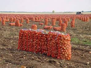 Сетка овощная в разном цвете (красная, зеленая, фиолетовая, бордовая и др.) , фото 2