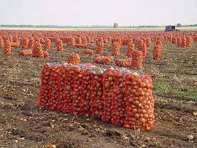 Овощная сетка в Черкассах и Черкасской области, фото 3