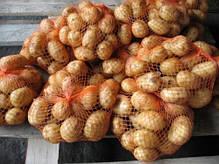 Овощная сетка для капусты и баклажанов размером 50*80см, фото 3