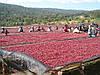 Родина кофе - страна Эфиопия.