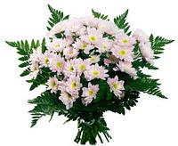 Хризантема розовая в букете 15шт