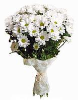 Хризантема ромашковая белая в букете 9шт