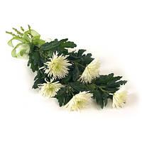 Хризантема одноголовая белая в букете 5шт