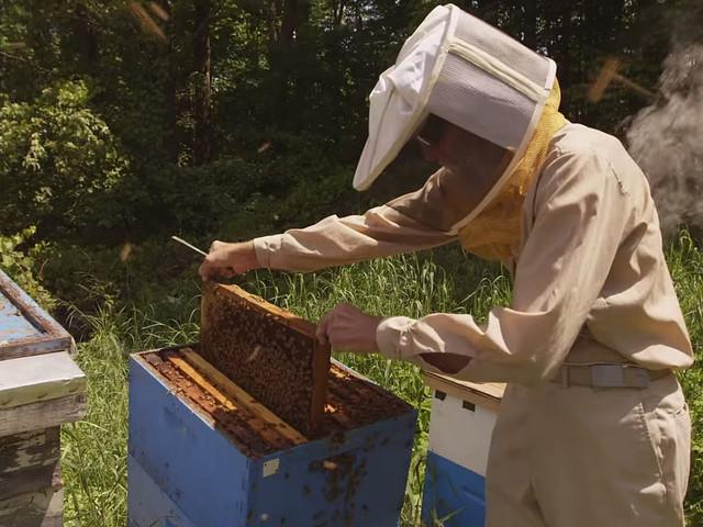 БАЛЬЗАМ ДЛЯ ГУБ BURT'S BEES BEESWAX LIP BALM