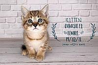 Девочка 19.02.18. Кошечка Чаузи Ф2 питомника Royal Cats, фото 1