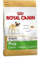 КОРМ ROYAL CANIN (РОЯЛ КАНИН) PUG ADULT для собак породы мопс в возрасте от 10 месяцев 0.5 кг