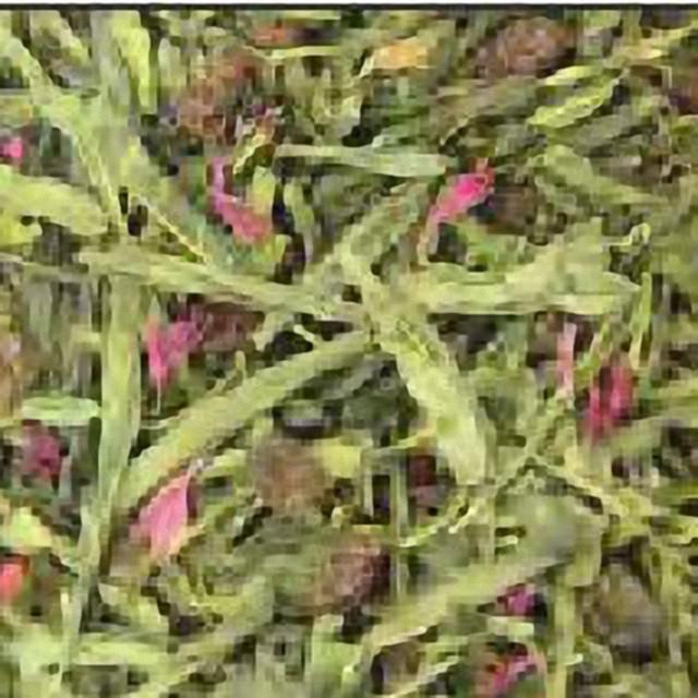 """Зелений ароматизований чай """"Барбарисовий"""""""