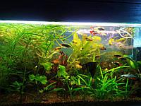 Светильник балка 36 Вт + лампа для аквариумов Osram 36 Вт/865