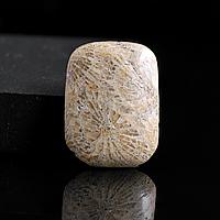 Коралл ископаемый, таблица кабошон, 190КБК