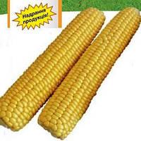 Семена кукурузы сладкой Ранняя Насолода F1 (2500 сем.)