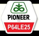 Насіння соняшник П64ЛE25 / P64LE25 круїзер