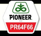 Насіння соняшник PR64F66