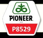 Насіння кукурудза П8529 / P8529 ФАО 280