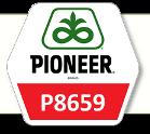 Насіння кукурудза П8659 / P8659 ФАО 290