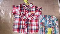 Рубашки на мальчика оптом, S&D, 6-16 рр