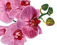 """Картина по номерам """"Розовая орхидея"""" [40 х 50 см, С Коробкой]"""
