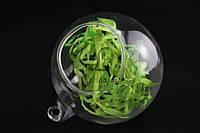 "Стеклянный шар ""Zamia"" для декора, диаметр 8см, Декоративный шар, Шар-ваза"