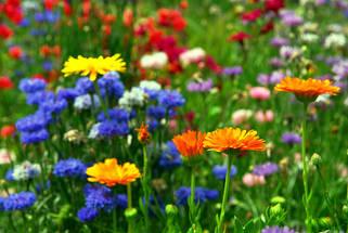 Для цветущих растений