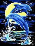 """Раскраска по цифрам 30х40 см. """"Дельфины"""" EX5006"""