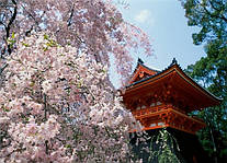 Шерстяные платки из Японии