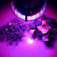 Фитолампы и фитолента (LED) Е27 для комнатных растений