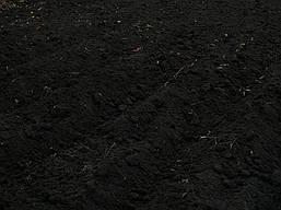 Чернозем с гумусом