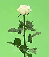 Роза белая 50см