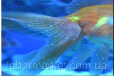 Профилактическая противопаразитарная обработка рыбы с помощью метиленового синего