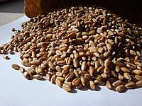 Озима пшениця органічна