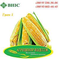Семена кукурузы под гербициды гибрид ГРАН 1 (ФАО 370) ВНИС