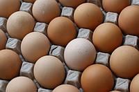 Нужно ли, мыть яйца перед инкубацией?