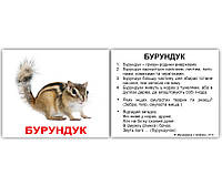 """Картки Домана """"Дикі тварини"""" з фактами МІНІ 40шт"""