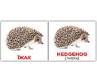 Картки Домана україно-англійські «Дикі тварини/Wild animals» МІНІ 40, фото 1