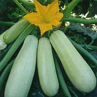 Семена кабачка Искандер  на вес в Украине