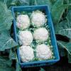 Семена капусты цветной Балбоа F1 2500 сем. Бейо заден.