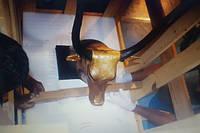 Коллекция предметов Тутанхамона доставлена в новый музей