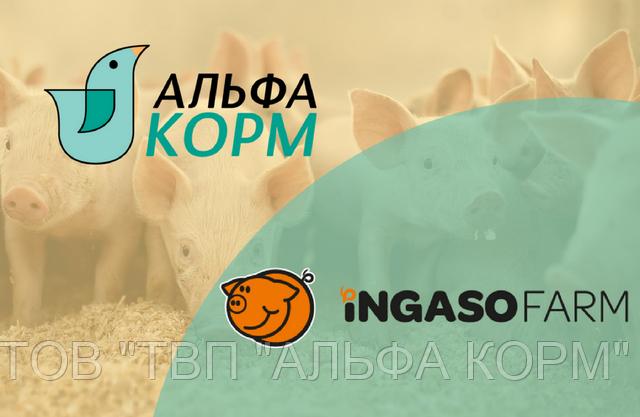 ТОВ «ТВП «АЛЬФА КОРМ» – ексклюзивний представник Ingaso Farm в Україні