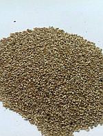 Семена Трава Тимофеевка луговая многолетняя, 1кг