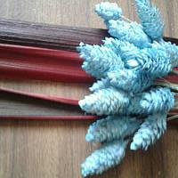Сухоцвет фалярис
