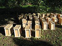 Продам ОПТОМ САМОВЫВОЗ С Мукачевою Пчелопакеты Карпатка., фото 1