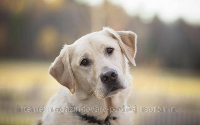 Роль жиров в рационе собаки