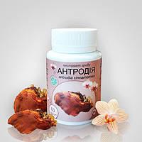 Гриб Антродия (красный камфорный гриб экстракт 8%) капсулы