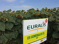 Семена подсолнечника ЕС Генералис СЛ, Euralis Semences