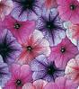Петунья многоцветная  Амфора Годвед микс 500 с