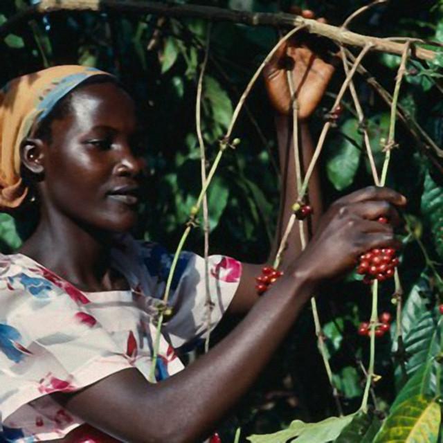 Кава «Робуста Уганда»